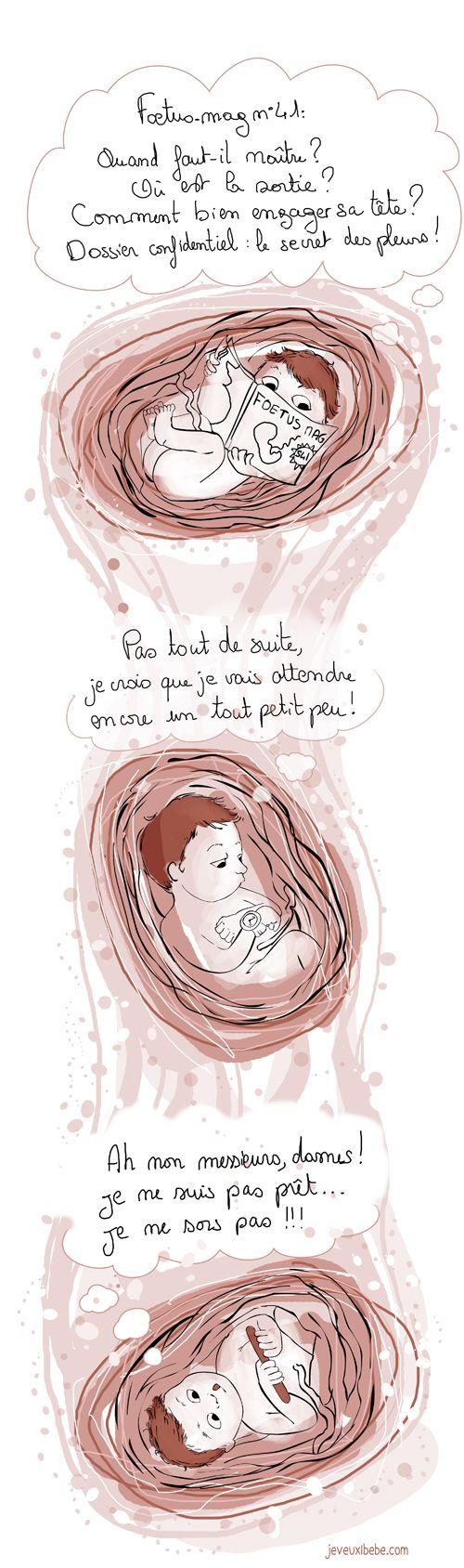 la vie in utero