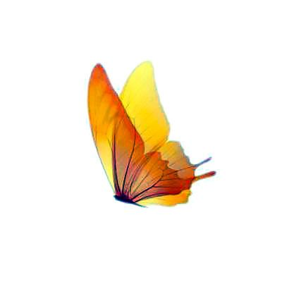 Graceful yellow/orange butterfly in motion, simple but powerful, symbol of freedom, destiny, inspiration and change. Ideal for smaller tattoos on visible places, such as neck, collarbone, shoulder.