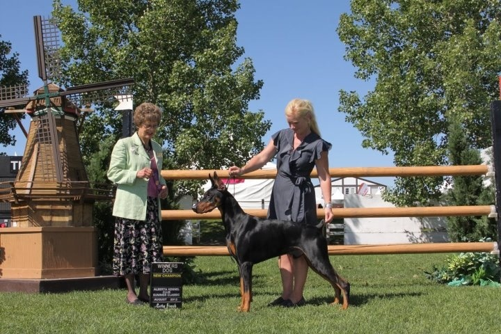 New Champion, August 2012 Spruce Meadows, Calgary, Alberta.