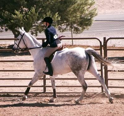 English Horseback Riding Lessons for Beginner Riders