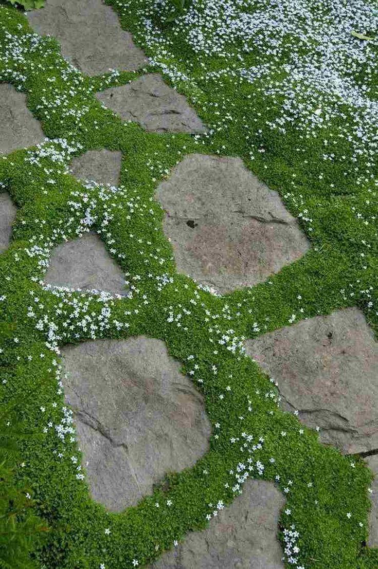 Top 10 des plantes couvre-sol: tapissez votre jardin avec style