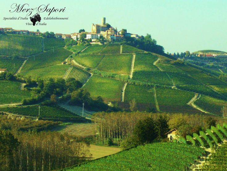 Piemonte: Die Heimat des Barolo und Barbaresco, welche 100% aus Nebbiolo gekeltert werden. Aber auch lebhafte, fruchtige und unkomplizierte Rotweine aus den heimischen Traubensorten Dolcetto und Barbera gedeihen hier ringsum die historischen Ortschaften der Langhe. http://www.merz-sapori.de/region.php?id=6&strname=Piemonte #weinausitalien #piemont