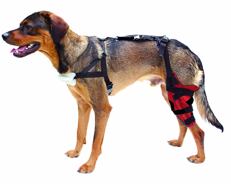 Best Inexpensive Dog Brace For Torn Acl