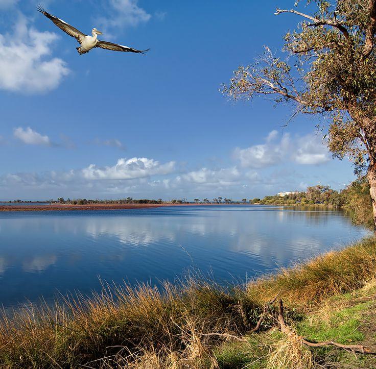 Pelican Country - Mandurah, Western Australia
