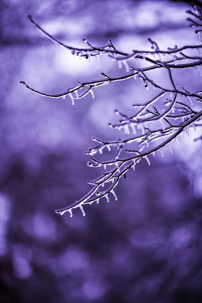˚After the Snowstorm - Alpharetta, Georgia