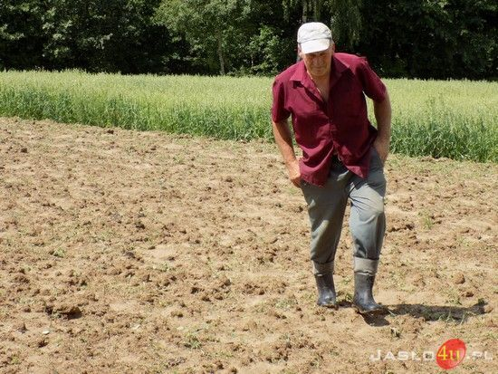 Plaga dzików w Sowinie :: Wiadomości :: Jaslo4u.pl