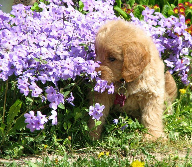 A beautiful picture my sister Teresa took of Gracey when she was a puppy :)
