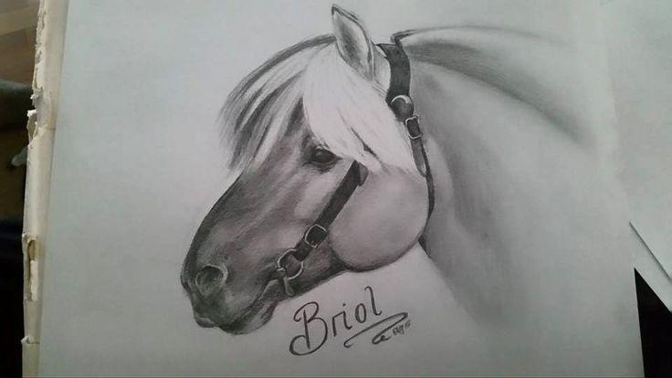 Fjordhorse, fjording, fjordhest, Brijol, stallion, hingst, horse, hest.