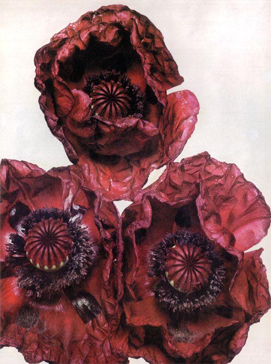 Three Poppies . Irving Penn .
