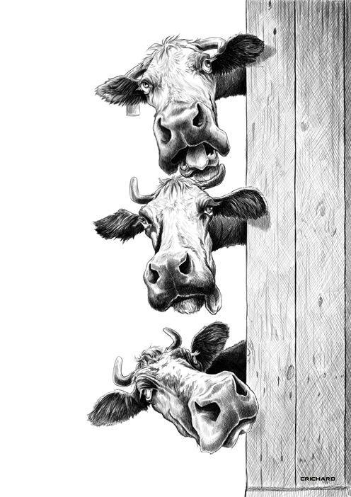Vaches par C. Richard: