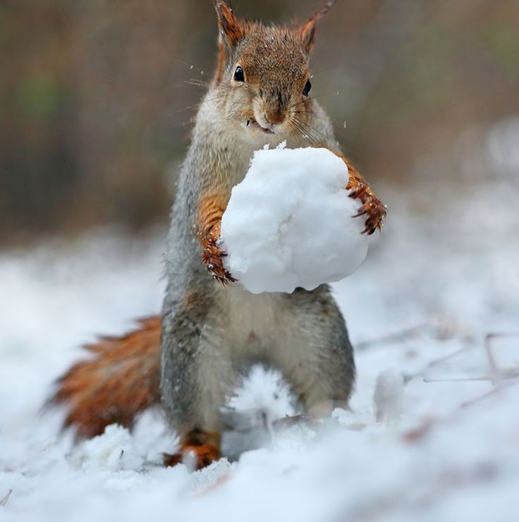 158 best Squirrels-favorite pet images on Pinterest | Squirrels ...