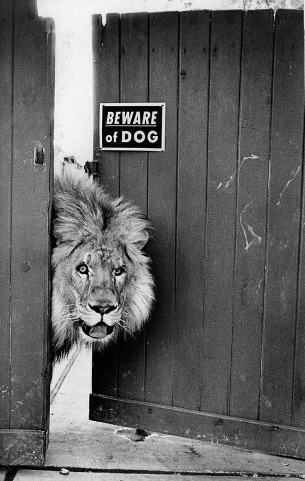 Lion & Beware of dog sign on a door funny