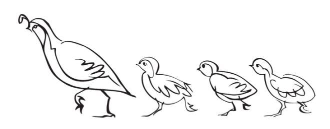 quail family.jpg