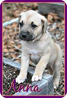 Pensacola, FL - German Shepherd Dog Mix. Meet Anna, a puppy for adoption. http://www.adoptapet.com/pet/12725156-pensacola-florida-german-shepherd-dog-mix