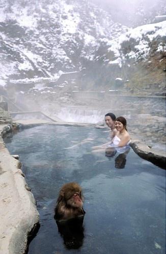 地獄谷野猿公苑 長野県 Enjoying the onsen with a snow monkey