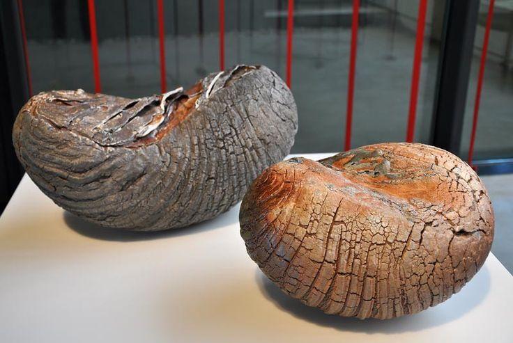 470 best images about c ramique raku on pinterest for Poisson coil