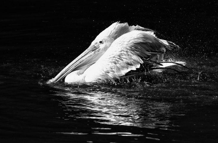 Černobílá fotografie - jak na ní?