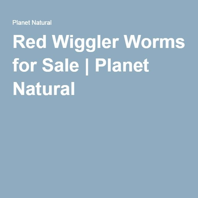 Red Wiggler Worms for Sale | Planet Natural