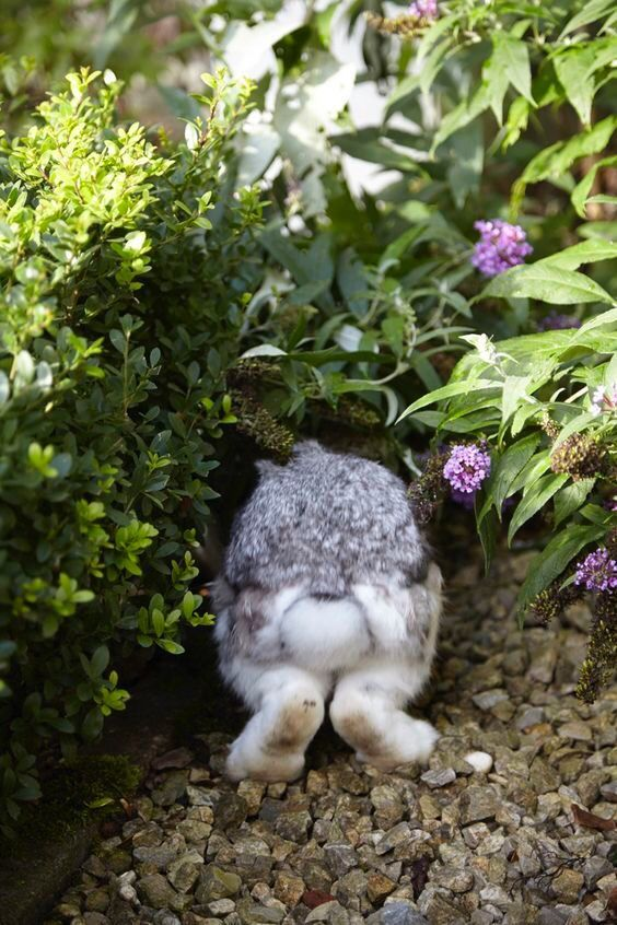 What is it about bunny bottoms that are so endearing.