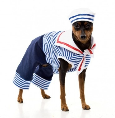 quit dressing dogs like this, it is not cute...