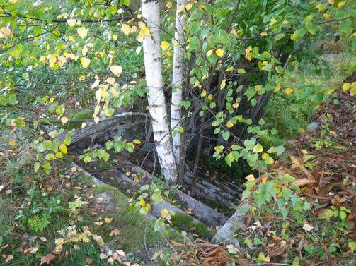 Salattu saari avautuu yleisölle - uskomaton luonto aivan Helsingin edustalla - IL-TV