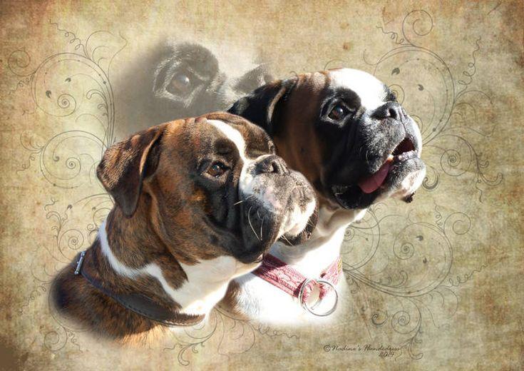 Deutscher Boxer Tiercollage, Collage Hund, Tieraufkleber