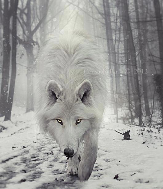"Wolf Spirit Animal | Wolf... ""shape shifter, magic maker, pathfinder"""