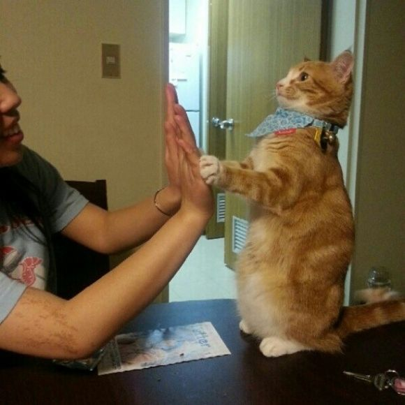 Having a tough day? You know what will brighten that right up? A high five from a badass kitty. | This Video Of Cats Giving High Fives Will Make Everything Better