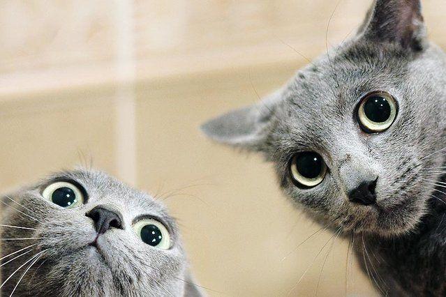 Głaskanie kota łagodzi stres, a jego mruczenie działa uspokajająco.