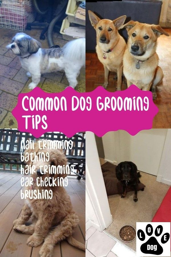 Dog Grooming Tips at Home – Get Started Today!