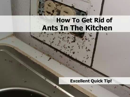 How To Get Rid Of Ants In Bathroom Home Design Ideas Extraordinary How To Get Rid Of Ants In Bathroom