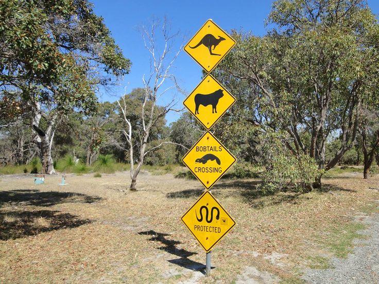 Perth Wildlife Park (Western Australia, Australia)by Arne Rasimus