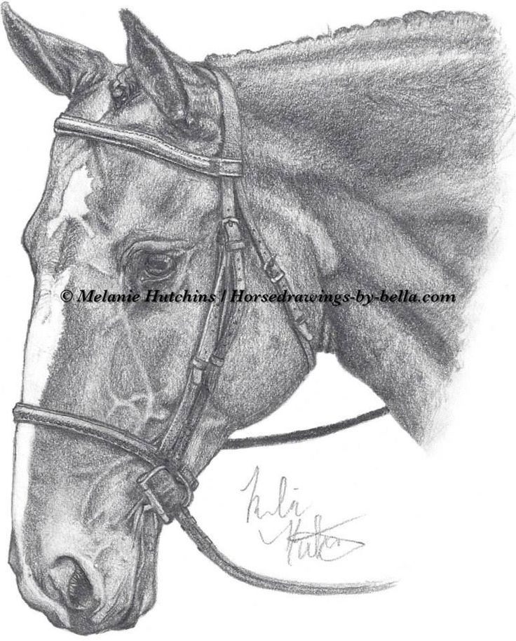 Portrait of Playboy. Copyright Melanie Hutchins / horsedrawings-by-bella  Follow me on Facebook: https://www.facebook.com/Horsedrawingsbybella.MelanieHutchins Twitter: https://twitter.com/MelHTheArtist YouTube: https://www.youtube.com/channel/UCZDEjNKuowAo92BhnMWWBzA