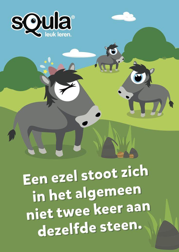 Het is erg dom om twee keer dezelfde fout te maken.  Educatieve poster met Nederlandse spreekwoorden en gezegden: Een ezel stoot zich in het algemeen niet twee keer aan dezelfde steen.