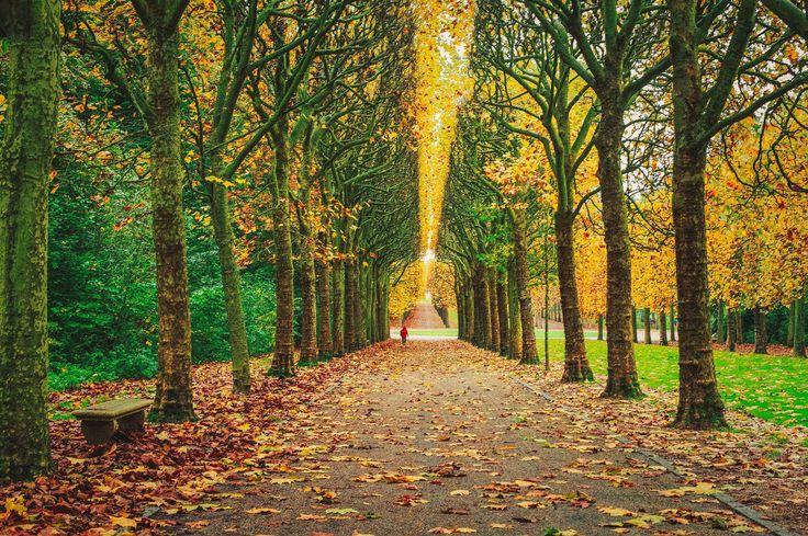 Kalmer worden dankzij oorverdovende stilte – 5 Tips https://sochicken.nl/stilte