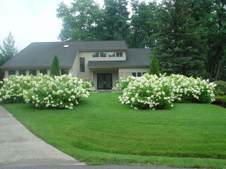 187 Best Hydrangea Garden Images On Pinterest | Hydrangea Garden, Flowers  And Hydrangeas