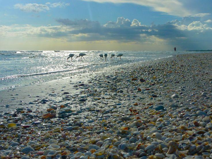 Sanibel Island, Florida.  More shells than you could ever imagine!