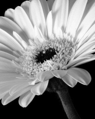 16 besten Flowers Bilder auf Pinterest | Gänseblümchen, Blumen und ...
