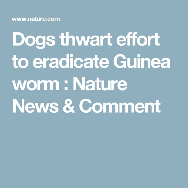 Dogs thwart effort to eradicate Guinea worm : Nature News & Comment