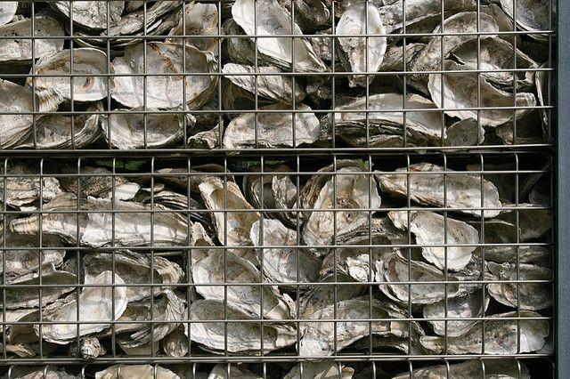 Wetland Park Oyster Shell Gabion Wall Sculpture Garden