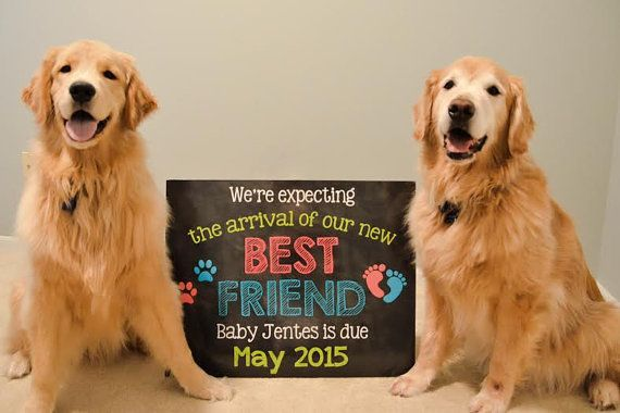 Are you looking for an adorable way to announce your pregnancy? This printable photo prop will allow you and your dogs to let everyone know