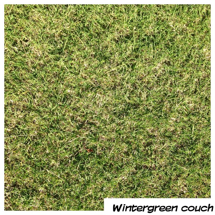 Wintergreen Couch - perfect for those areas that need a tough grass that will withstand punishment but is still soft underfoot.