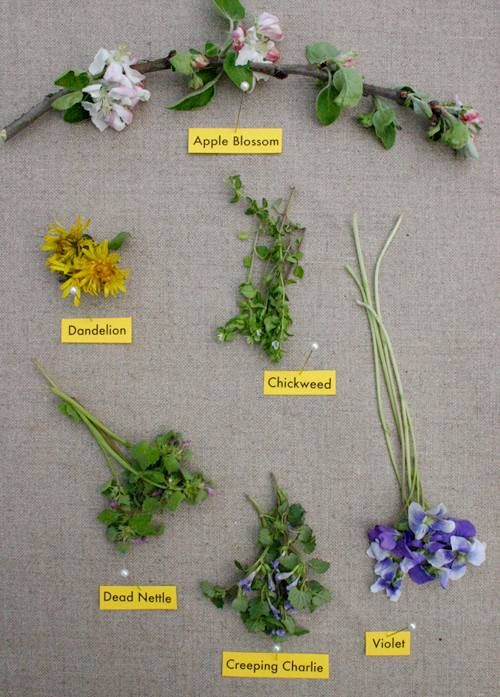 Guide- edible flowers