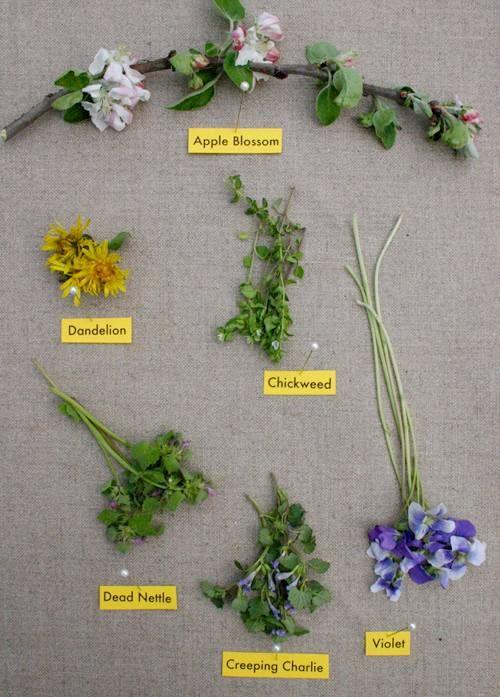 Edible spring wildflowers