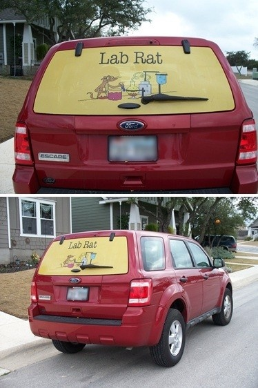 Best Window Decals Images On Pinterest Window Decals Signage - Custom rear window decals for cars