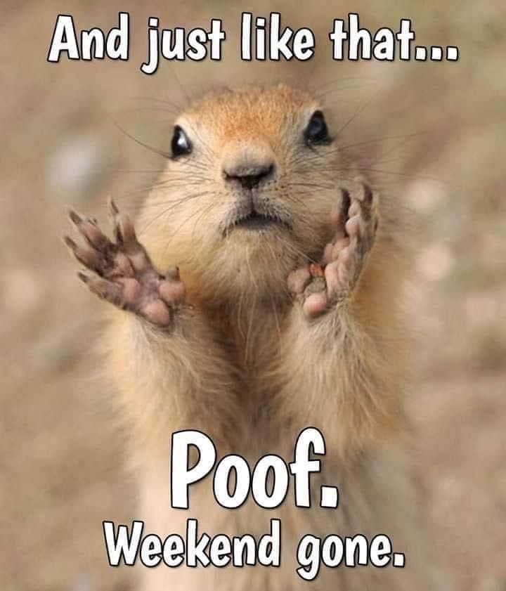 Pin By Colette Sage On Giggle S Laughs Weekend Humor Funny Animals Funny Good Morning Quotes