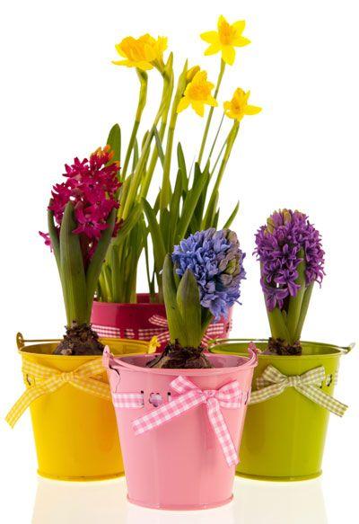 plantar bulbos de dalias, gladiolos, hemerocalis, azucena, etc en octubre cada semana o cada 15 dias articulos.infojardin.com