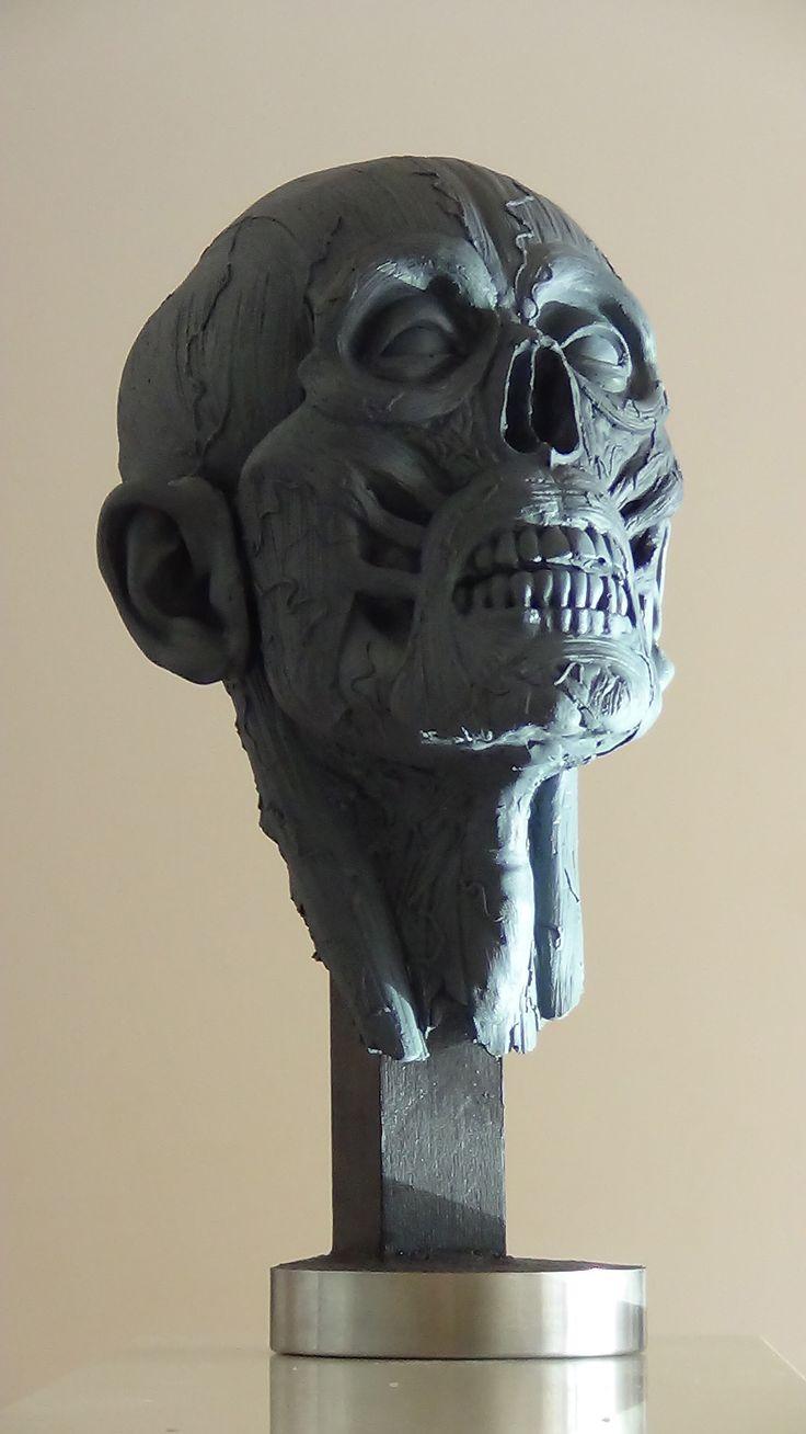 anatomical head sculpture