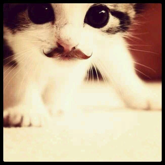 Kitty mustache :)