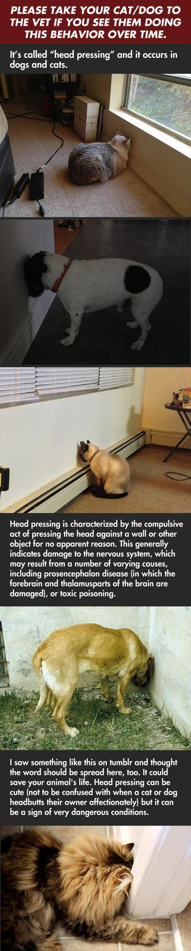 """""""Head Pressing"""" by dogs and cats. Did a search and confirmed this is legit. Link to page on Pet MD site with more information."""